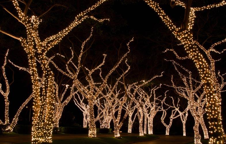 Blue Sky Commercial Decor :: Tree Lighting
